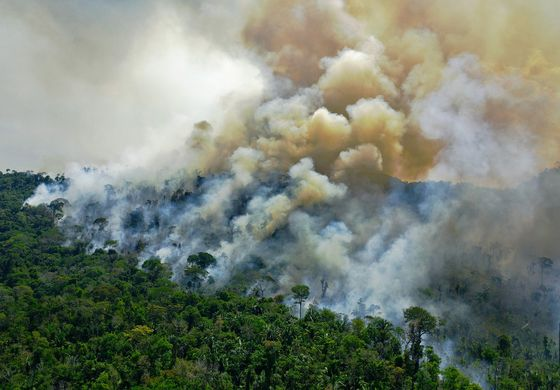 Exploit the Amazon: Brazil Unveils Its Radical New Sales Pitch