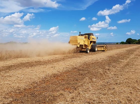 As Heat Scorches Fields, Brazil's Soy Yields Prove Resilient