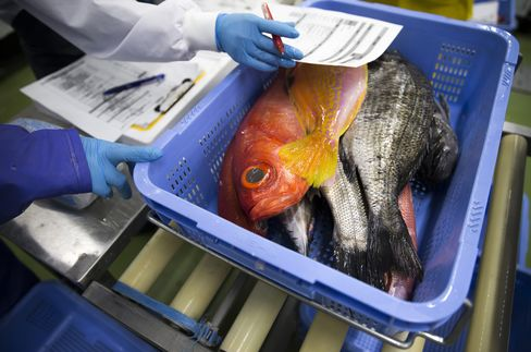 羽田空港内で仕分けされる魚