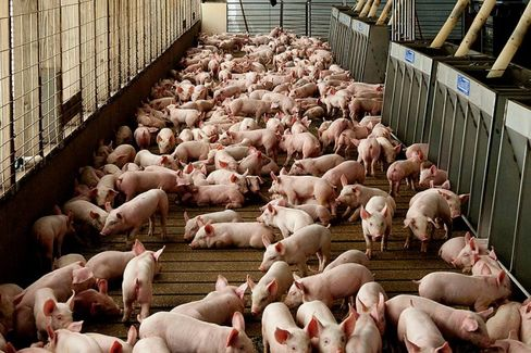 Restrictions on Livestock Antibiotics Don't Worry the Drugmakers