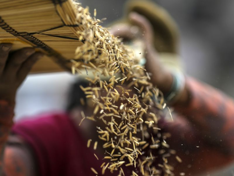 Sorting Rice At An APMC Grain Wholesale Market As Modi Looks To Double Farm Incomes By 2022