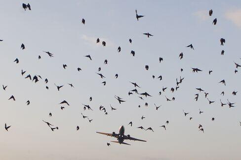 Bird flight risk