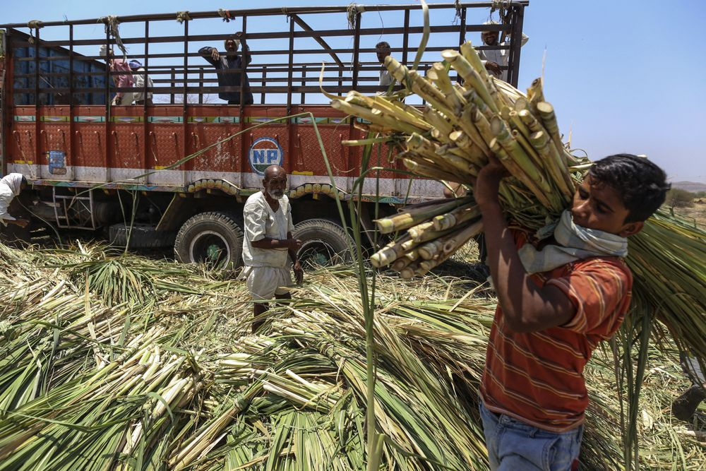 Brazil Sugar Mills at Risk by Record Crop 9,000 Miles Away - Bloomberg
