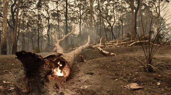 Australia Braces to Relive Its 'Hotter Than Hell' Wildfire Nightmare