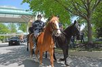 Baltimore's mounted police unit appears at a parade honoring healthcare workers in May.