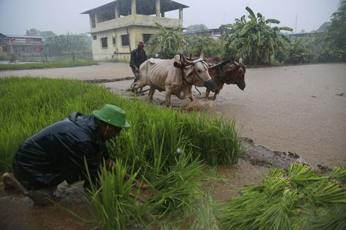 India Monsoon Agriculture