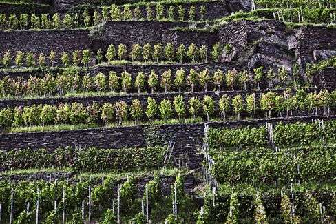 The steep, terraced vineyards of the Ahr region are extremely successful in growing pinot noir, although it is one Germany's northernmost regions. The region's pinots are spicy and velvety.