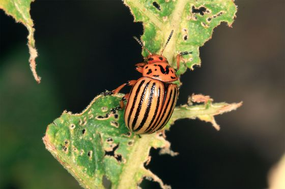 Startup GreenLight Is Mass-Producing RNA to Fight Crop Pests