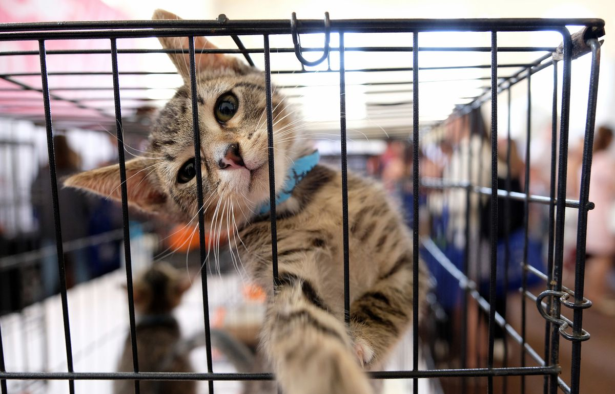 Pet Adoption Surge Offers Another Boon for Animal Health Stocks