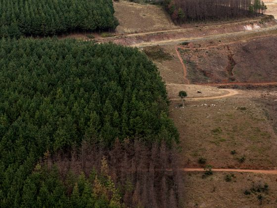 Oil Giant Eni Will Help Protect African Forests to Offset Its Carbon Footprint