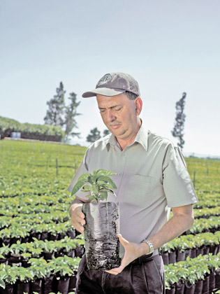 Mario, Starbucks's director of global agronomy, with one of 165,000 seedlings at Hacienda Alsacia