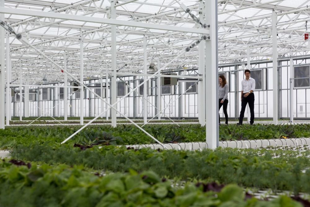 The Direct To Consumer Model Of Montreal S Lufa Farms Bloomberg