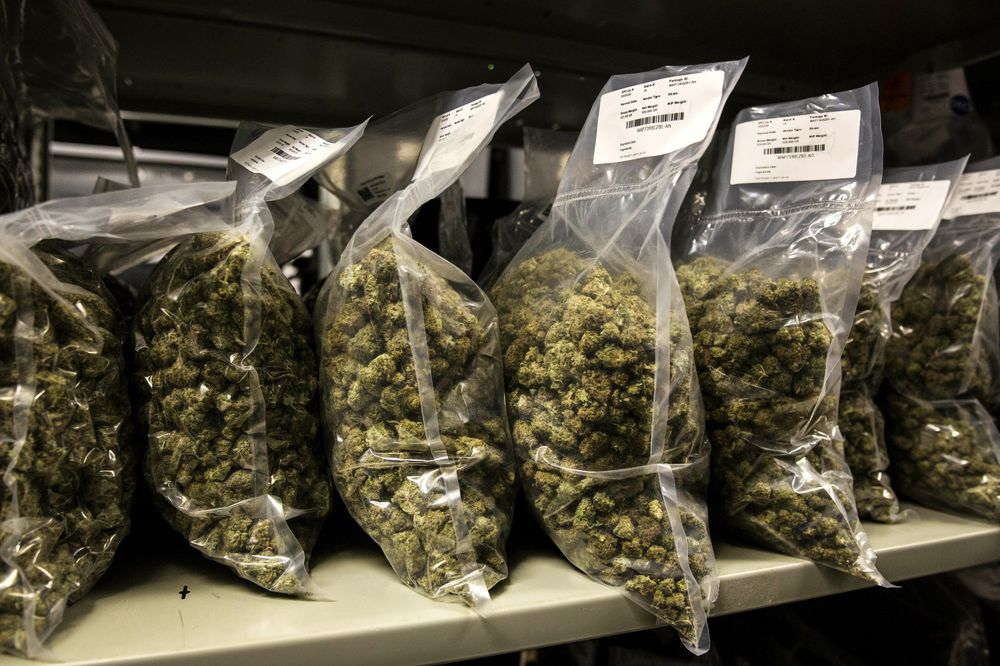 Canopy Gains as Revenue Offsets Drop in Production, Margins