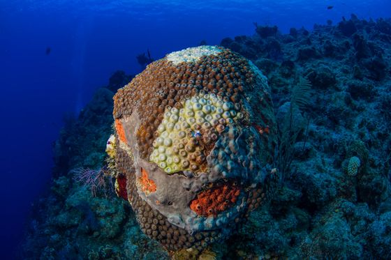 ThisDeadly Coral Disease Is ThreateningMore Than Just Reefs