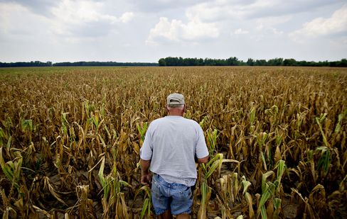 Drought Damps Optimism of U.S. Farmers, Agribusinesses