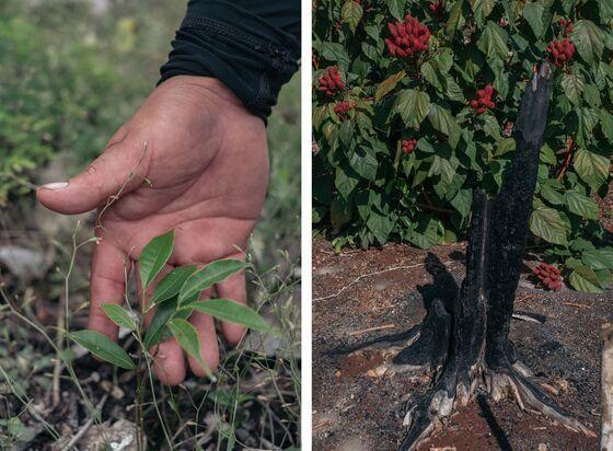 How Mexico's Vast Tree-Planting Program Ended Up Encouraging Deforestation