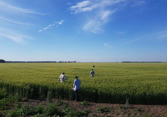 Break in Clouds for Macri as Argentina Revs Wheat Harvesters