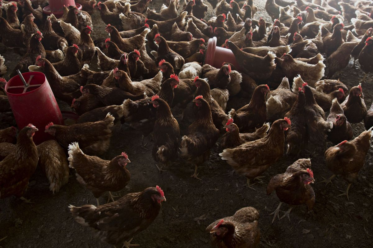 Poultry Prices Soar to Record Amid U.S. Chicken-Sandwich Wars