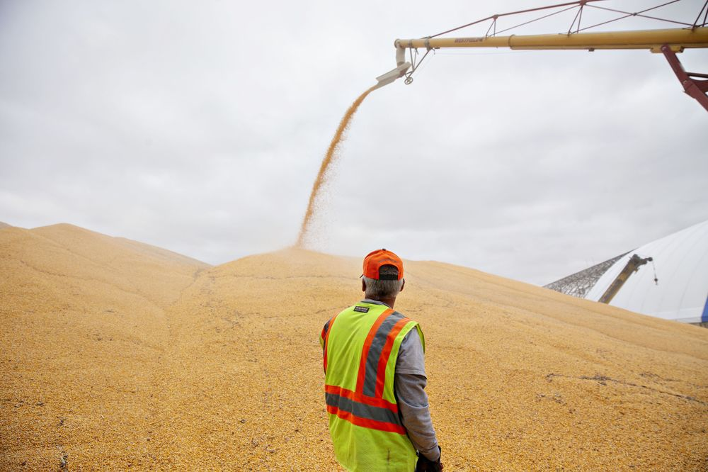 Surging Corn Prices Put U.S. Wheat Back in the Feed Trough