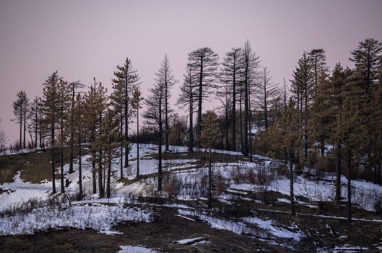 Over 4 Million Acres Burned During 2020 California Wildfire Season