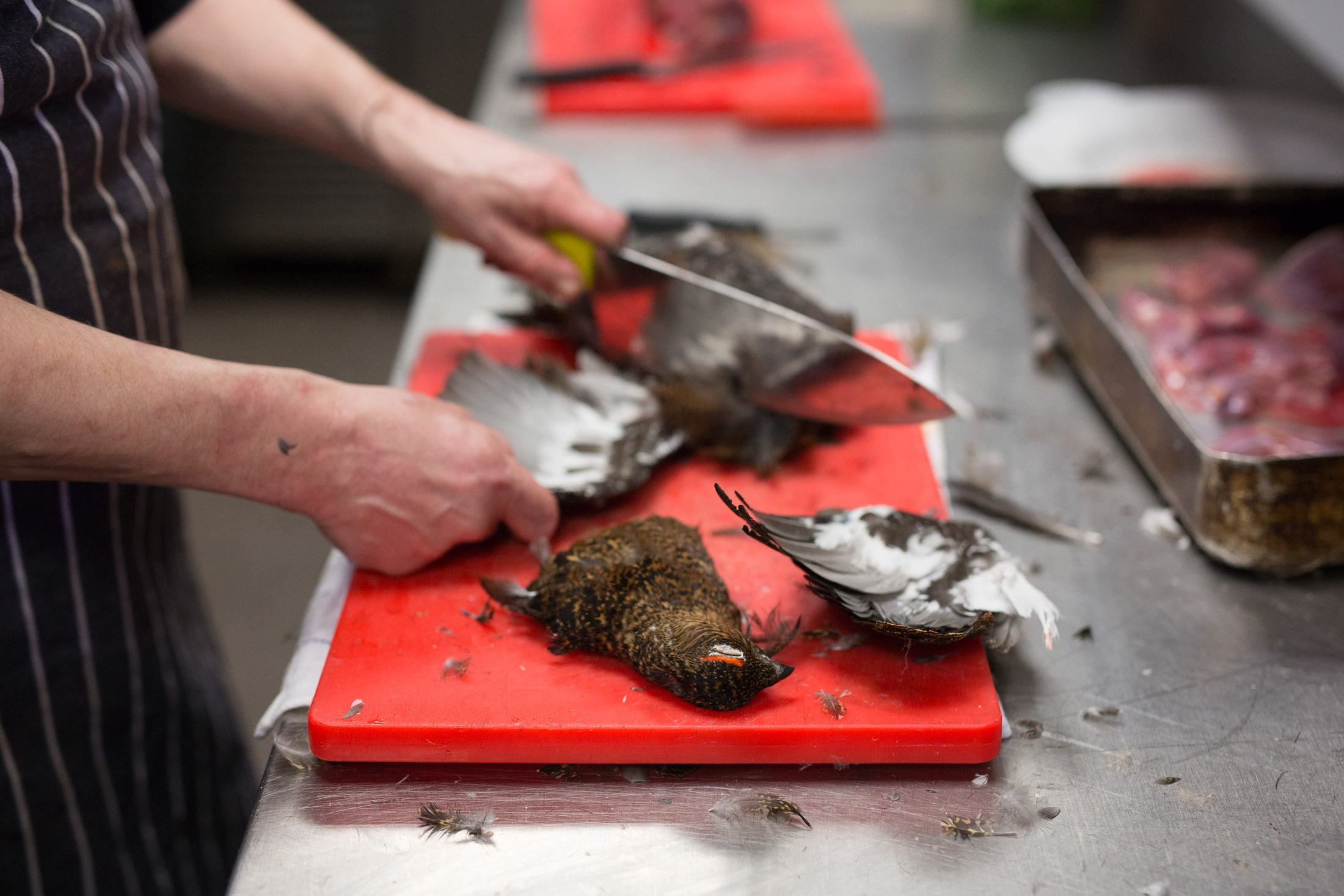 Preparing the Grouse