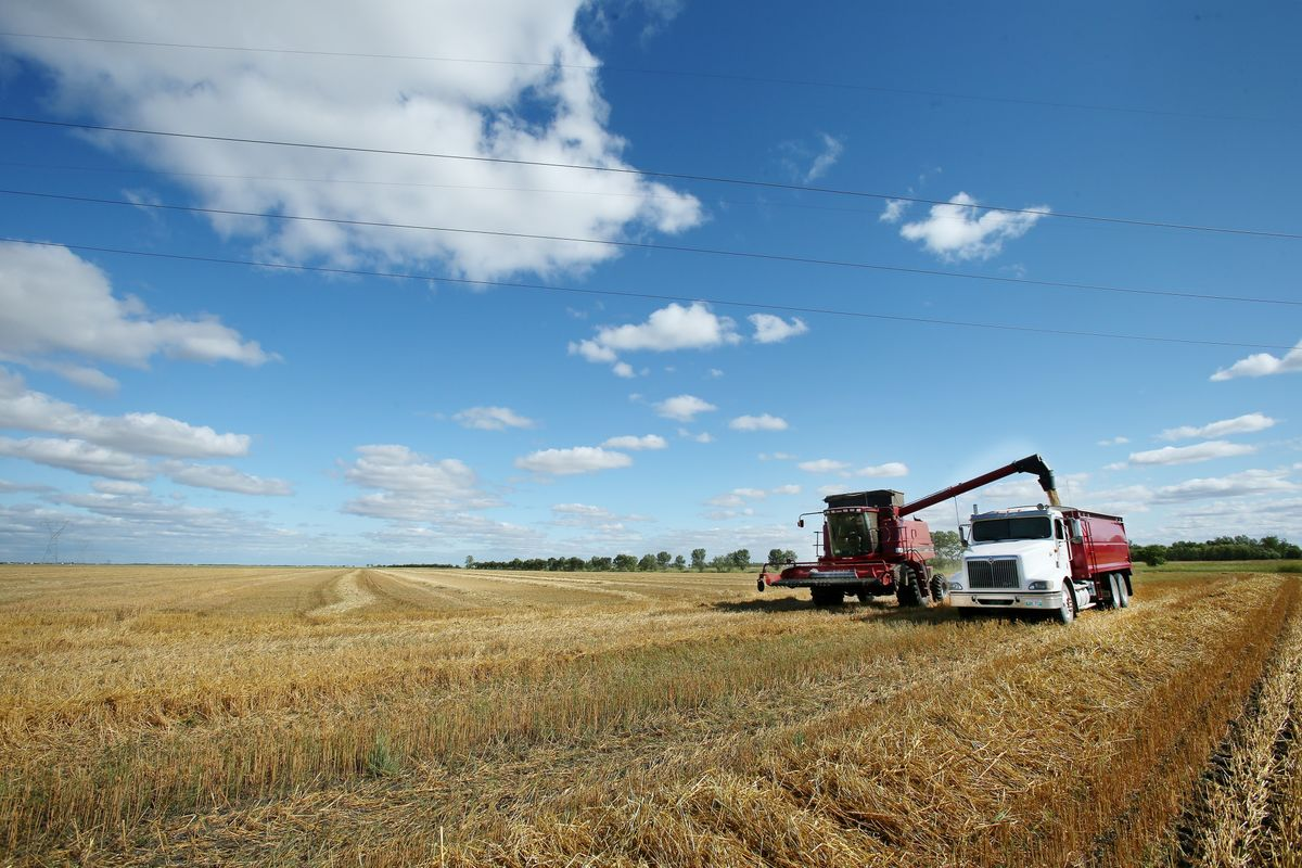Wondering If Wintry Weather Is Affecting Grain Markets? Ask Oats