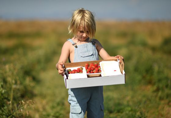 What to Do With This Year's Bumper Strawberry Crop
