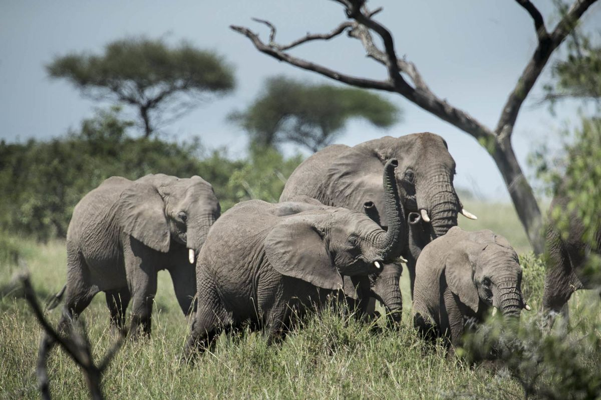 paul allen is using technology to save the african elephant