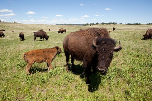 The growing appetite for bison is part of a wider trend toward organic foods, a small but expanding part of the food industry.