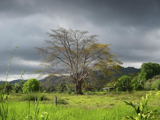 For $24 MillionYou Can Buy 3,300 Acresof Costa Rican Paradise
