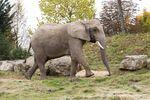 Zoo Transforms Animal Waste Into Energy