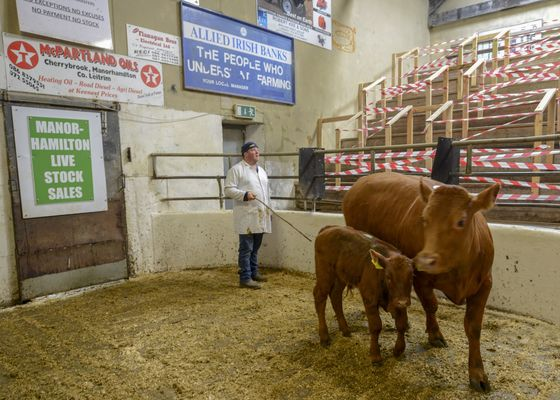 Battle Over Ireland's Cows Will Test Europe's Green Credentials