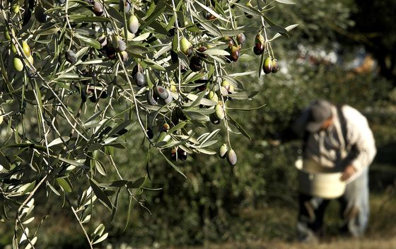 In Olive-Trade Fight With Trump, EU Braces for Farm-Subsidy Test