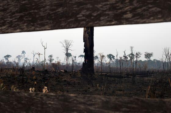 Norway Warns Its Companies to Not Hurt Brazil's Rainforest
