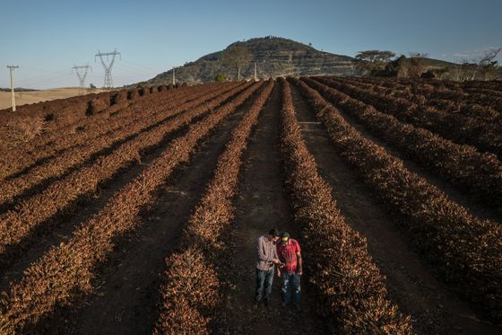 The Country That Makes Breakfast for the World Is Plagued by Fire, Frost and Drought
