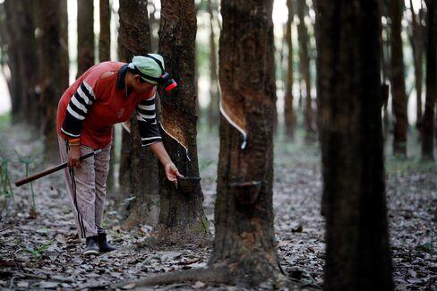 Thai Rubber Exporters Begin Buying in Tokyo, Shanghai