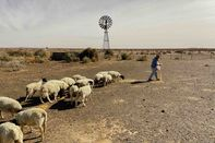 relates to An Arid Future Arrives Early in South Africa's Farm Country