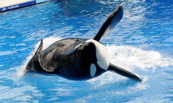 Seaworld Sued by SEC for Failing to Disclose 'Blackfish' Impact