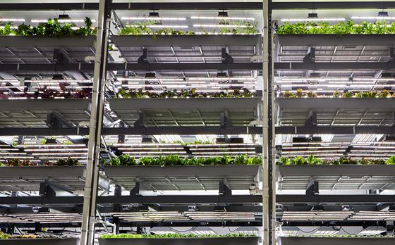 An Amazon Veteran Joins Indoor Farming Startup