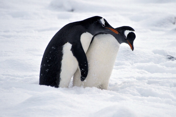 Why We Love Penguins