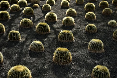 Cacti at the Annenberg Retreat at Sunnylands in Rancho Mirage, Calif.
