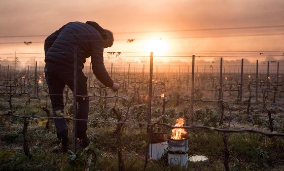 Severe Frost in France Leaves a Trail of Lost Crops Behind