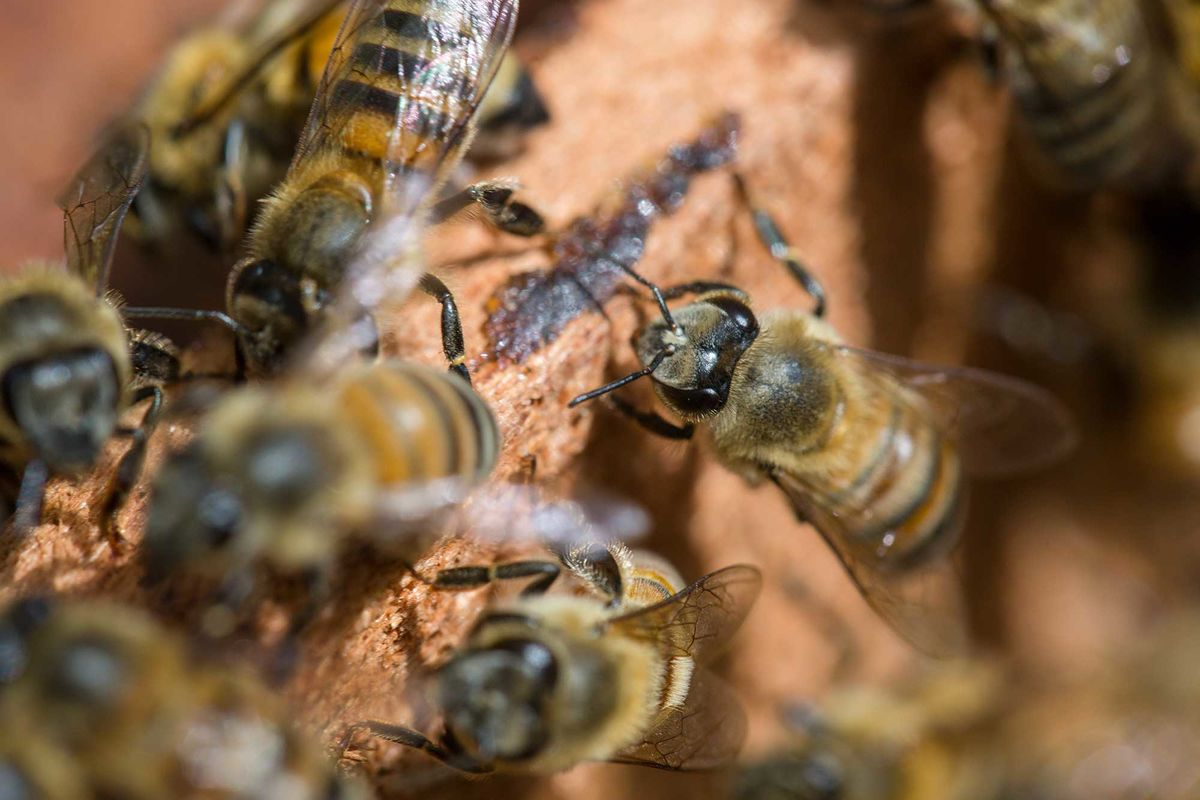 Bees on the Farm May be More Valuable Than Pesticides, Study Shows