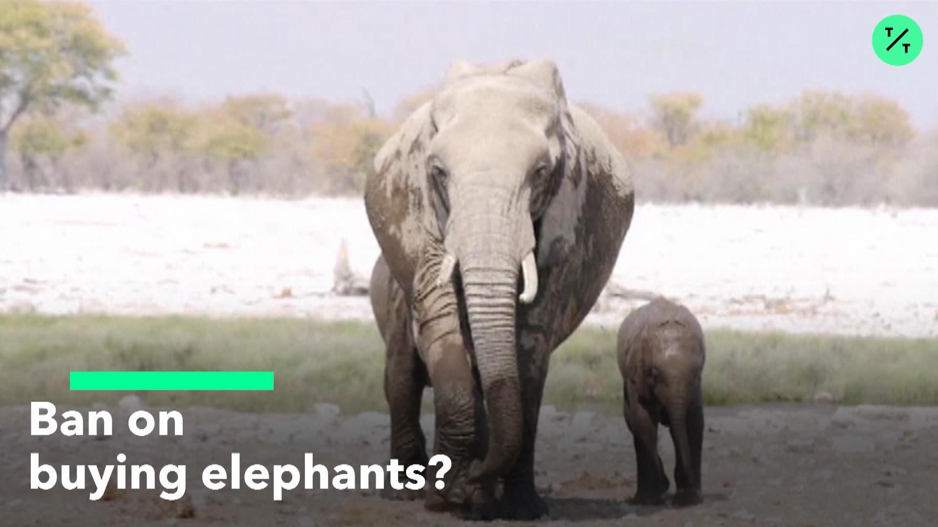 Ban On Buying Elephants?