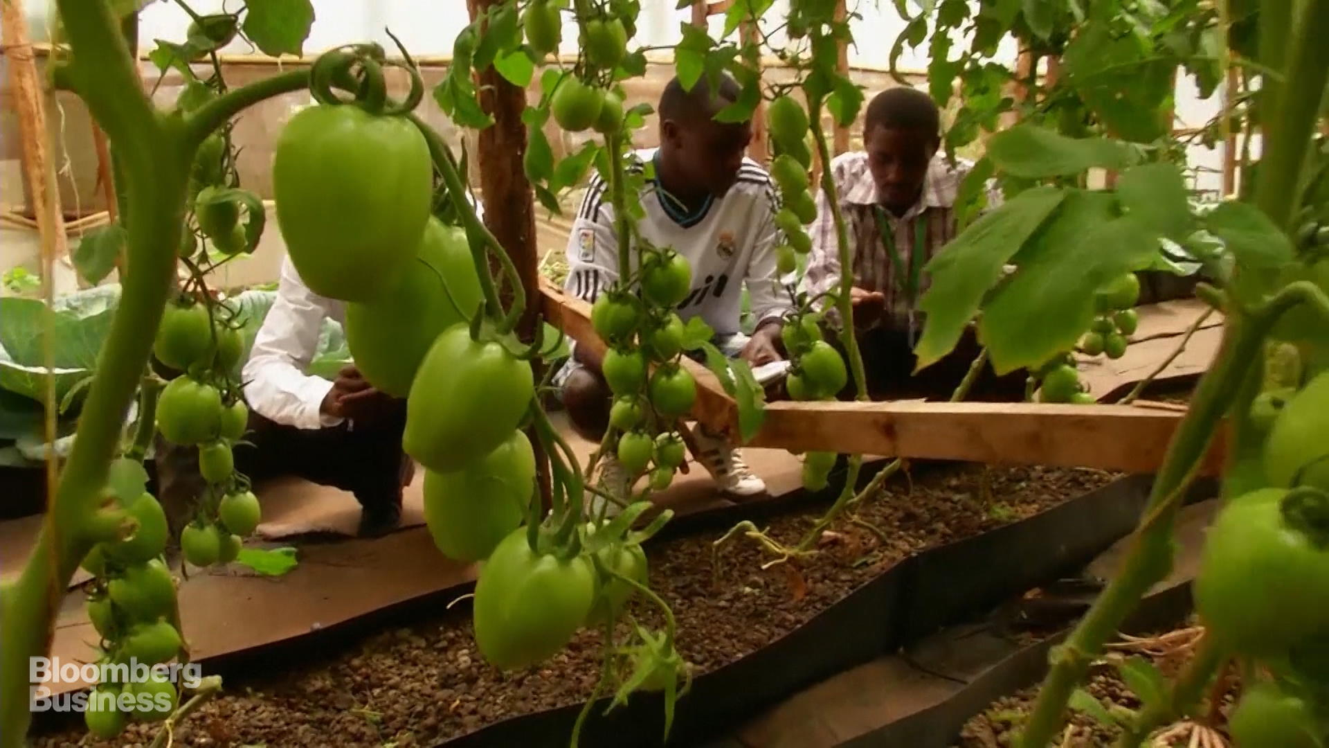 Image result for hydroponics in africa