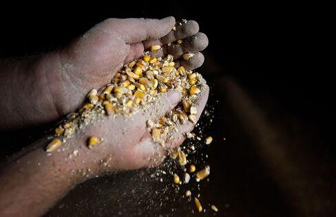Corn Below $6 Seen as Farmers Plant Most Since 1936