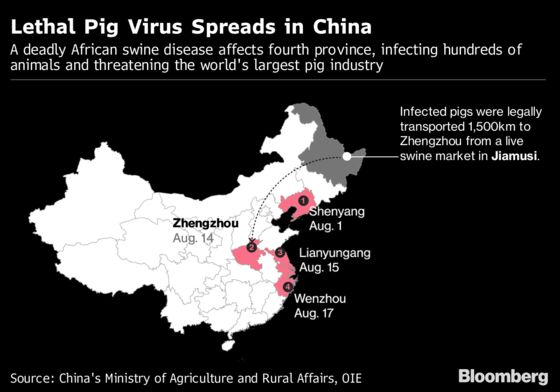 China's African Swine Fever Outbreak Could Spread to Korea, SE Asia