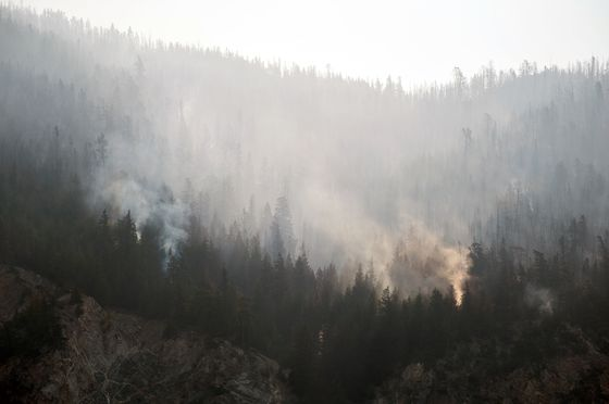 British Columbia Seeks Military Help to Fight Growing Wildfires