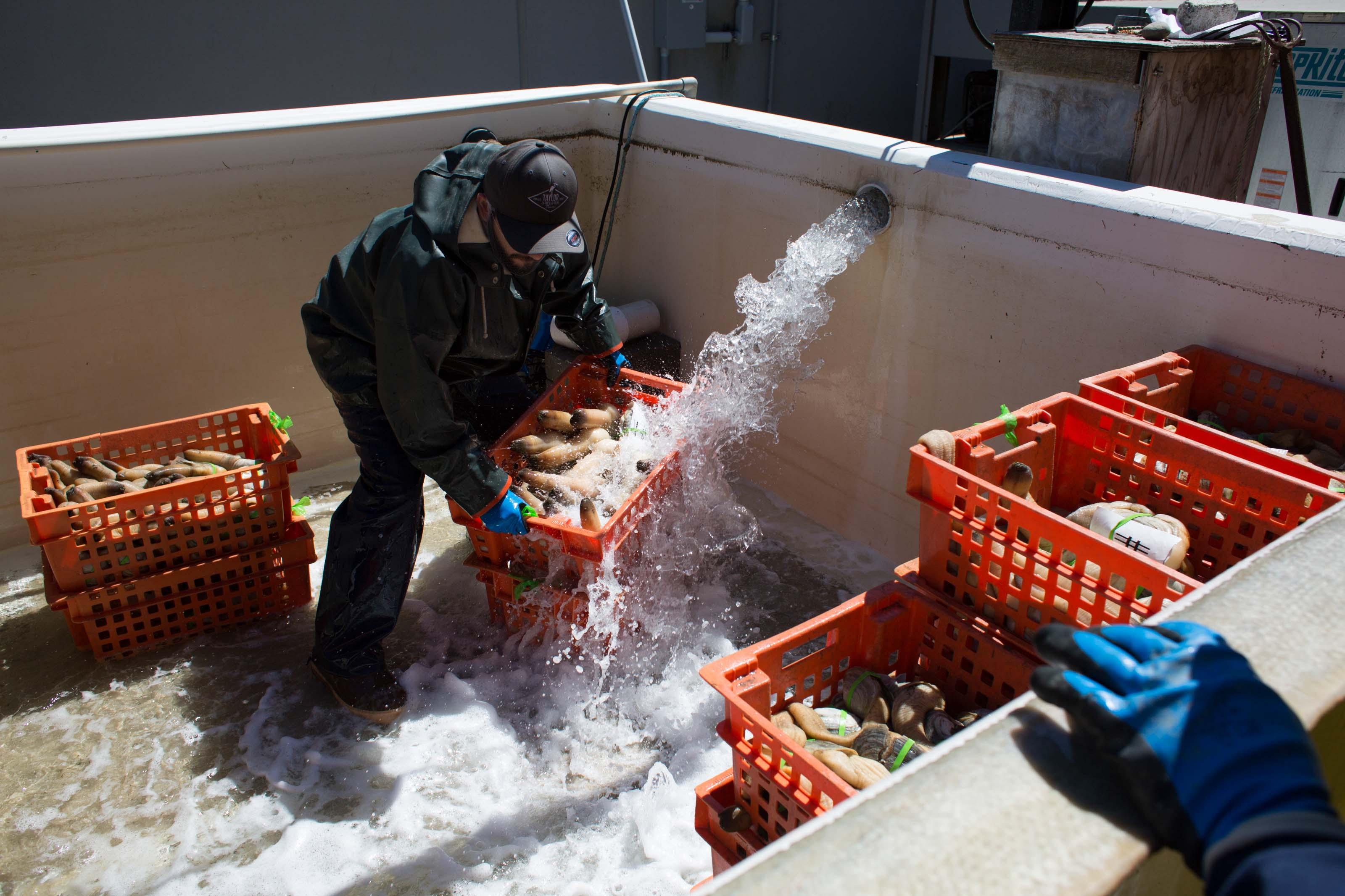 Rinsing the Harvest
