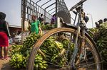 A Tenth of the World Could Go Hungry While Crops Rot in Fields